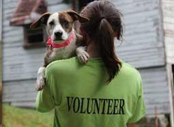 volunteer-contest
